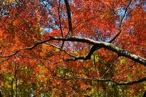 展覧山の紅葉